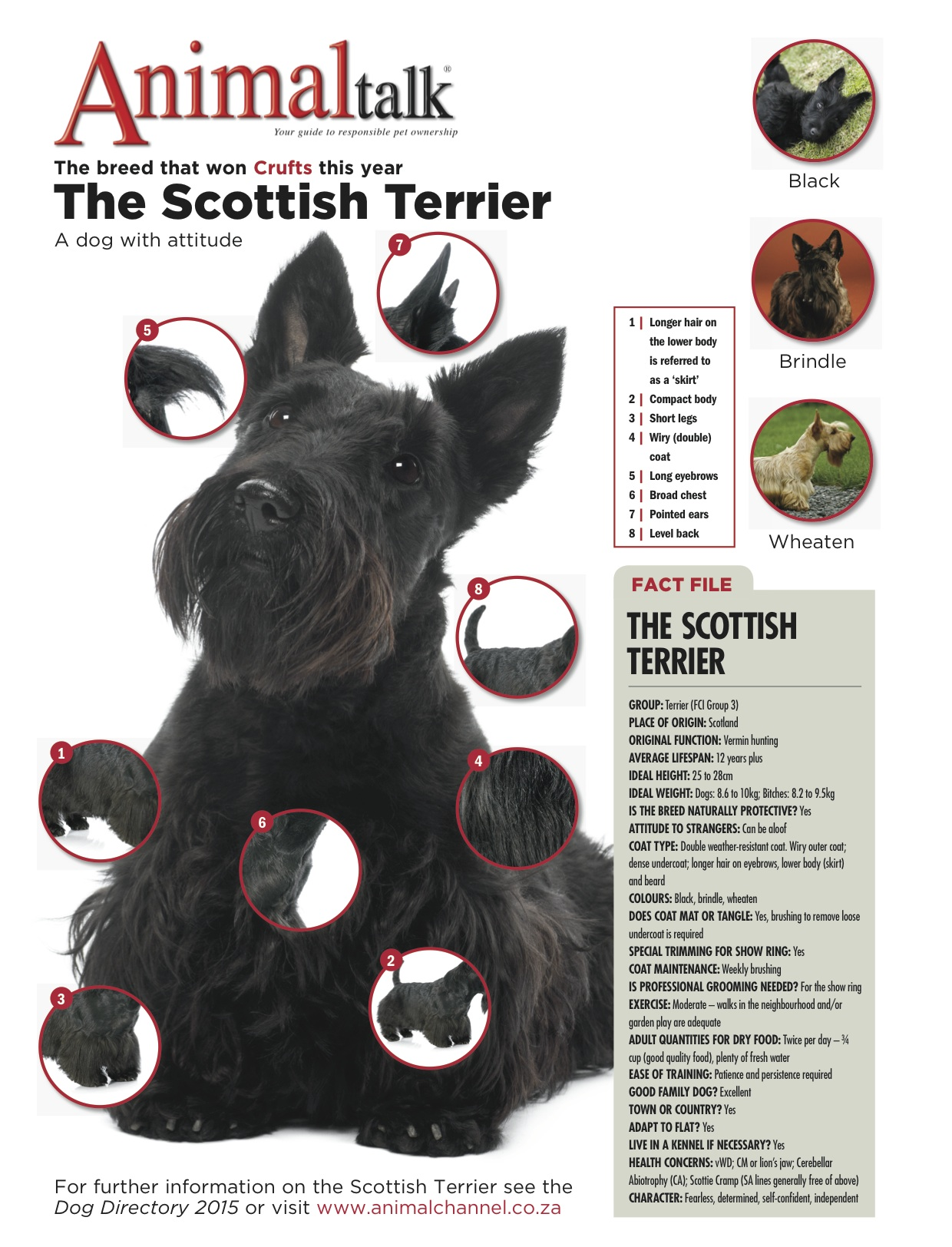 The-Scottish-Terrier. The Scottish Terrier The Scottish Terrier The Scottish Terrier