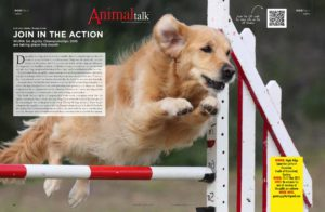 AT-May-Pgs-34-35-1 Join in the action: WUMA Agility Champs Join in the action: WUMA Agility Champs AT May Pgs 34 35 1 1