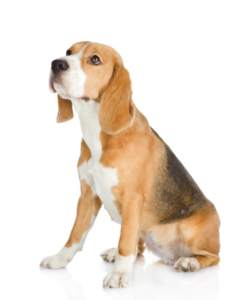 Beagle2