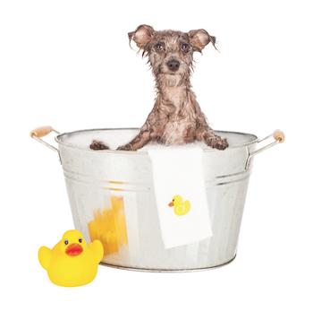 Doggie bath Bathing tips for washing your dog Bathing tips for washing your dog Doggie bath