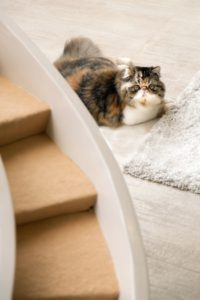 Improve your cat's indoor life with a stimulating environment