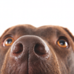 Dogs are capable of detecting cancer through smell.