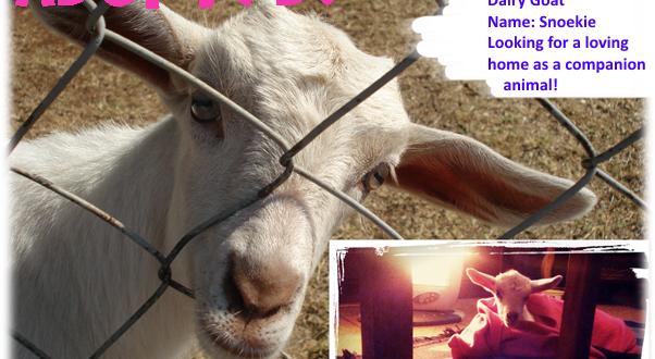 Tshwane SPCA snoekie