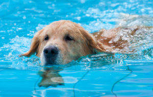 shutterstock_71269336 Water safety for your dog Water safety for your dog shutterstock 71269336