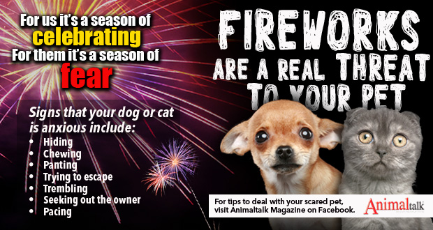 Fireworks are a real threat to your pets!