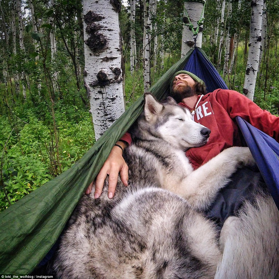 Kelly Lund and his wolfdog Loki on one of their adventures A man and his wolfdog A man and his wolfdog 2C58570C00000578 3234264 image a 28 1442329569483
