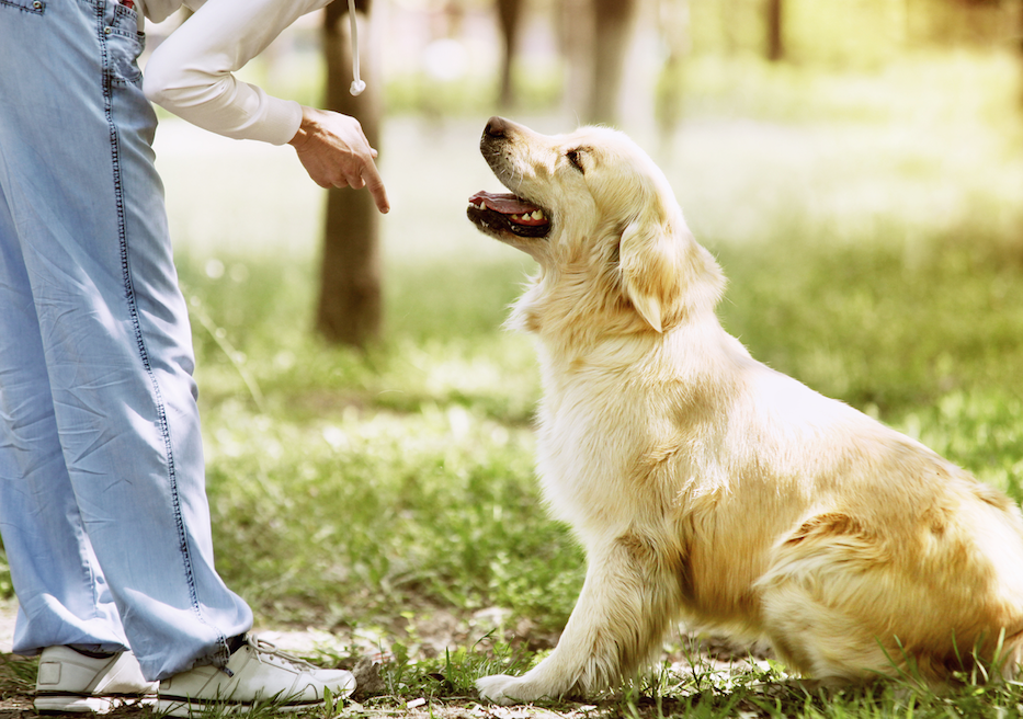 Choose a dog breed that is most suitable to your home environment and your family's lifestyle.