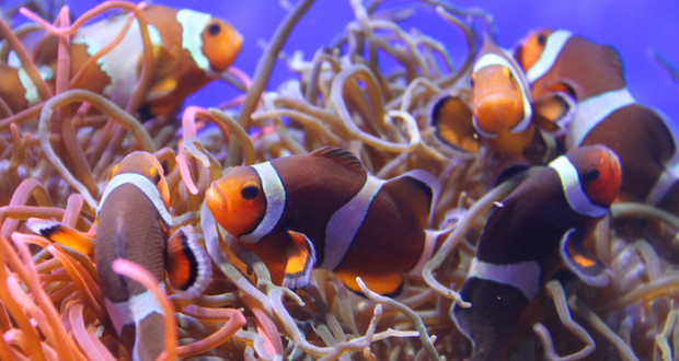 A marine aquarium can provide a wonderful focal point in your home, a place for rest and relaxation