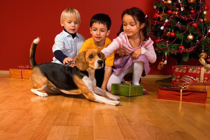 Tis the season to be ... careful what you feed your pet!   Christmas rules shutterstock 20805484