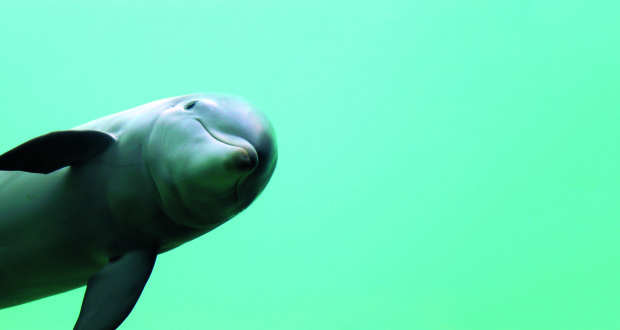 The dolphin is one of the world's favourite animals.