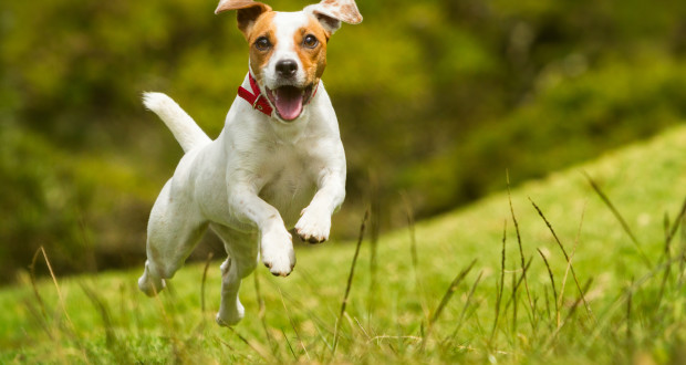 Your dog still needs exercise in the warm weather, but be sure to keep an eye on him