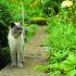 Help your pet to enjoy your garden by keeping it safe for them