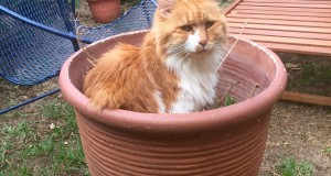 Muffin in one of his favourite spots. Sent in by Izelda du Toit