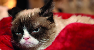 Grumpy Cat is an internet sensation, known for being, well, grumpy
