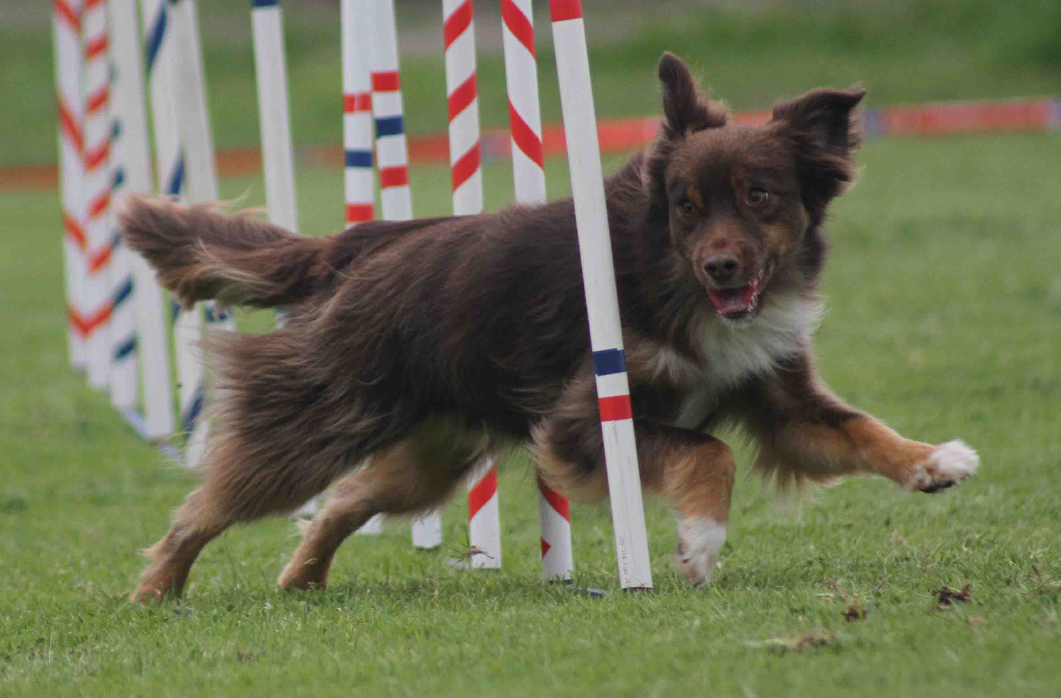R-The showing his agility skills