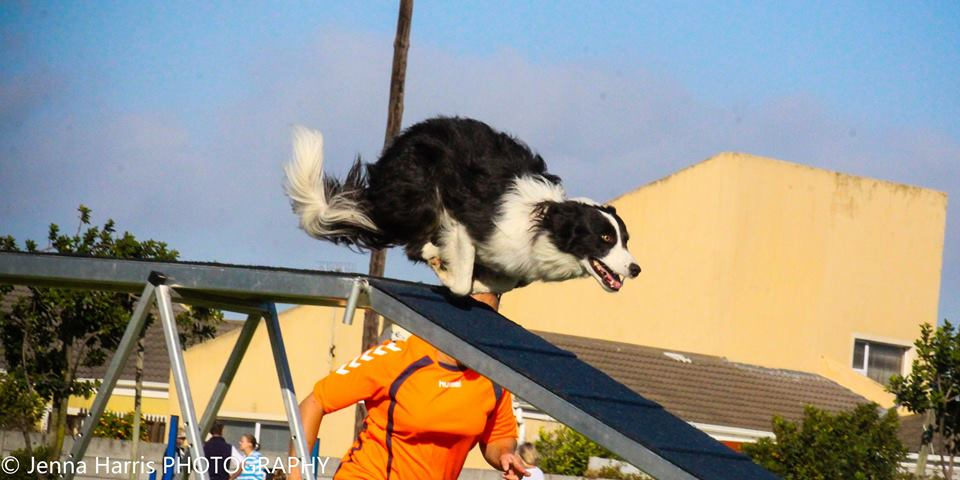 Catch me if you can! Animaltalk Top Dog Awards – meet the agility winners! (Part 8) Animaltalk Top Dog Awards – meet the agility winners! (Part 8) Catchi dw Jenna