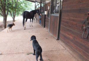 DSCF4388 Part 34 – Visiting a friend's horse and a restaurant Part 34 – Visiting a friend's horse and a restaurant DSCF4388
