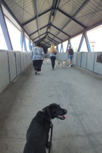 bridge Part 30 – Walkies in Randburg Part 30 – Walkies in Randburg bridge