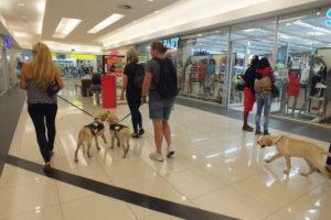 mall 2 Part 30 – Walkies in Randburg Part 30 – Walkies in Randburg mall 2