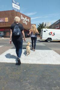 road 2 Part 30 – Walkies in Randburg Part 30 – Walkies in Randburg road 2