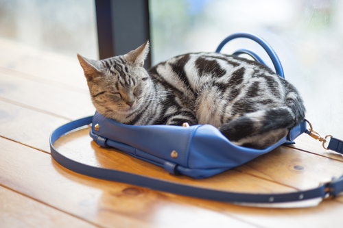 Cats have the uncanny ability to make themselves comfortable in the strangest places! Why do cats sleep so much? Why do cats sleep so much? shutterstock 203096440