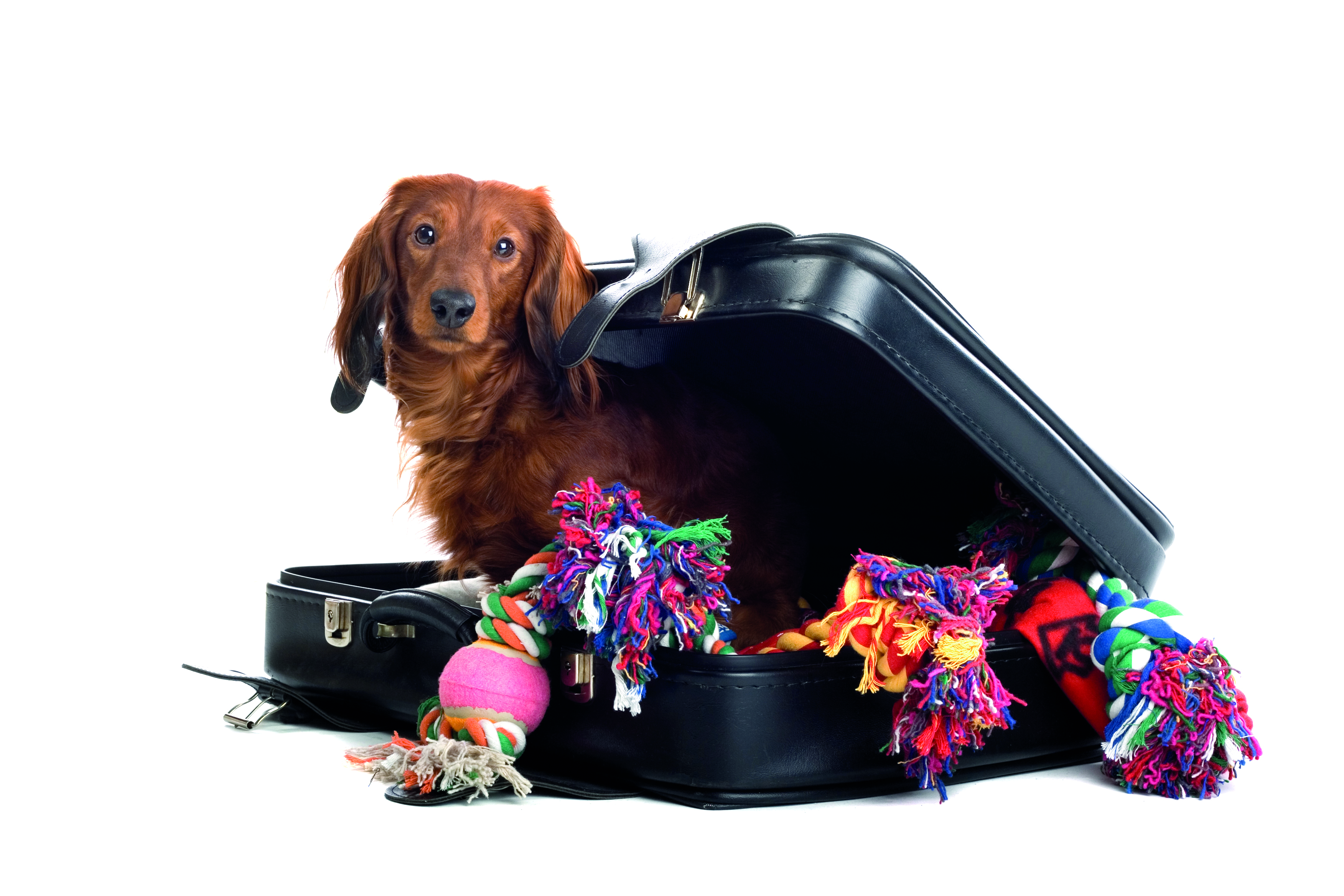 My things are packed, i'm going with my humans! emigration Emigrating with your pets - it's not as hard as you think Emigration