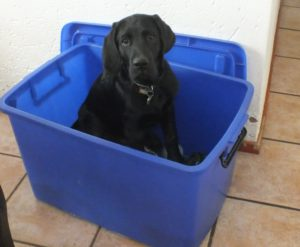 toy box Part 37 – I've got bigger! Part 37 – I've got bigger! toy box