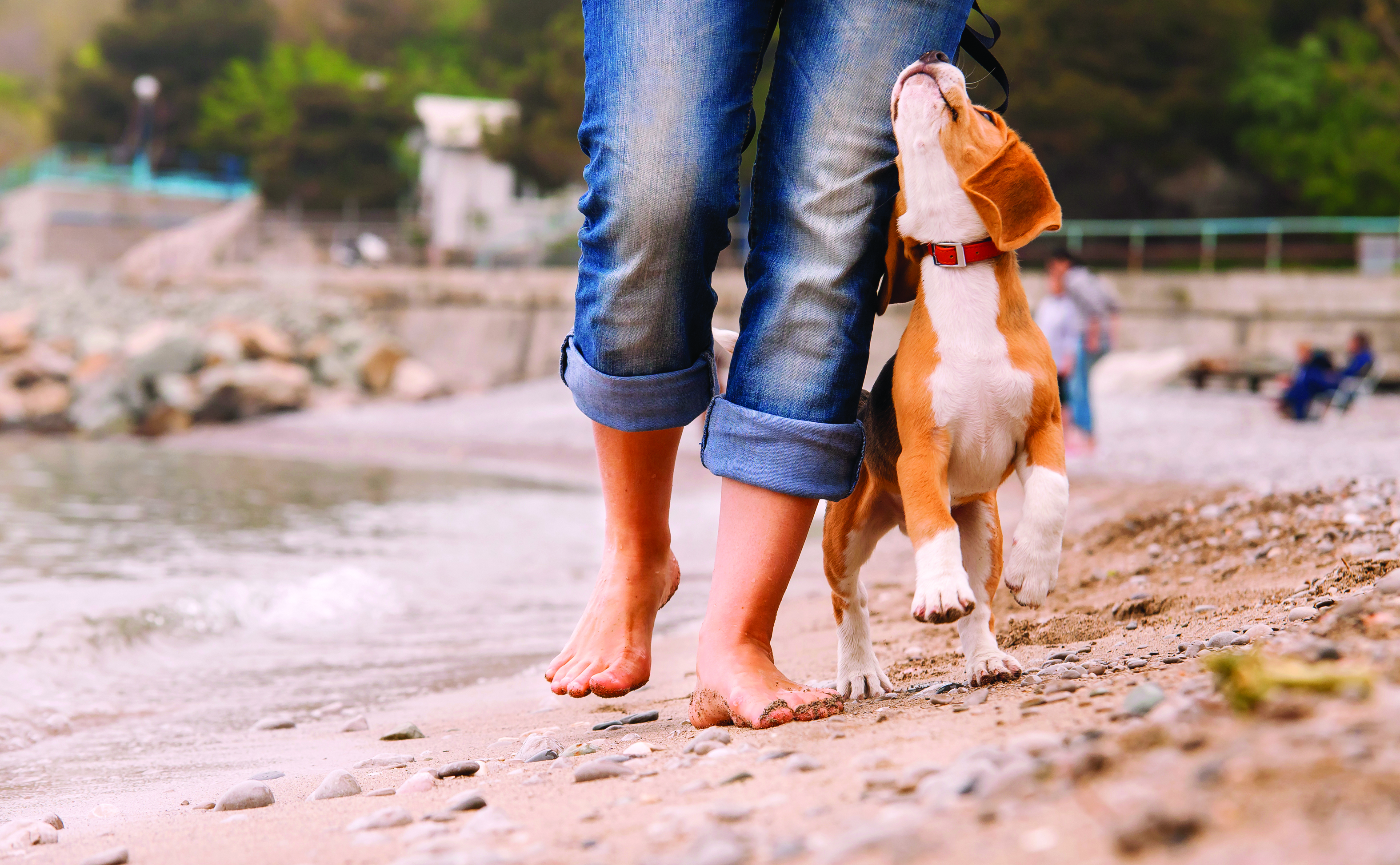 Walking your dog - 7 things you need to know Walking your dog - 7 things you need to know shutterstock 171147395
