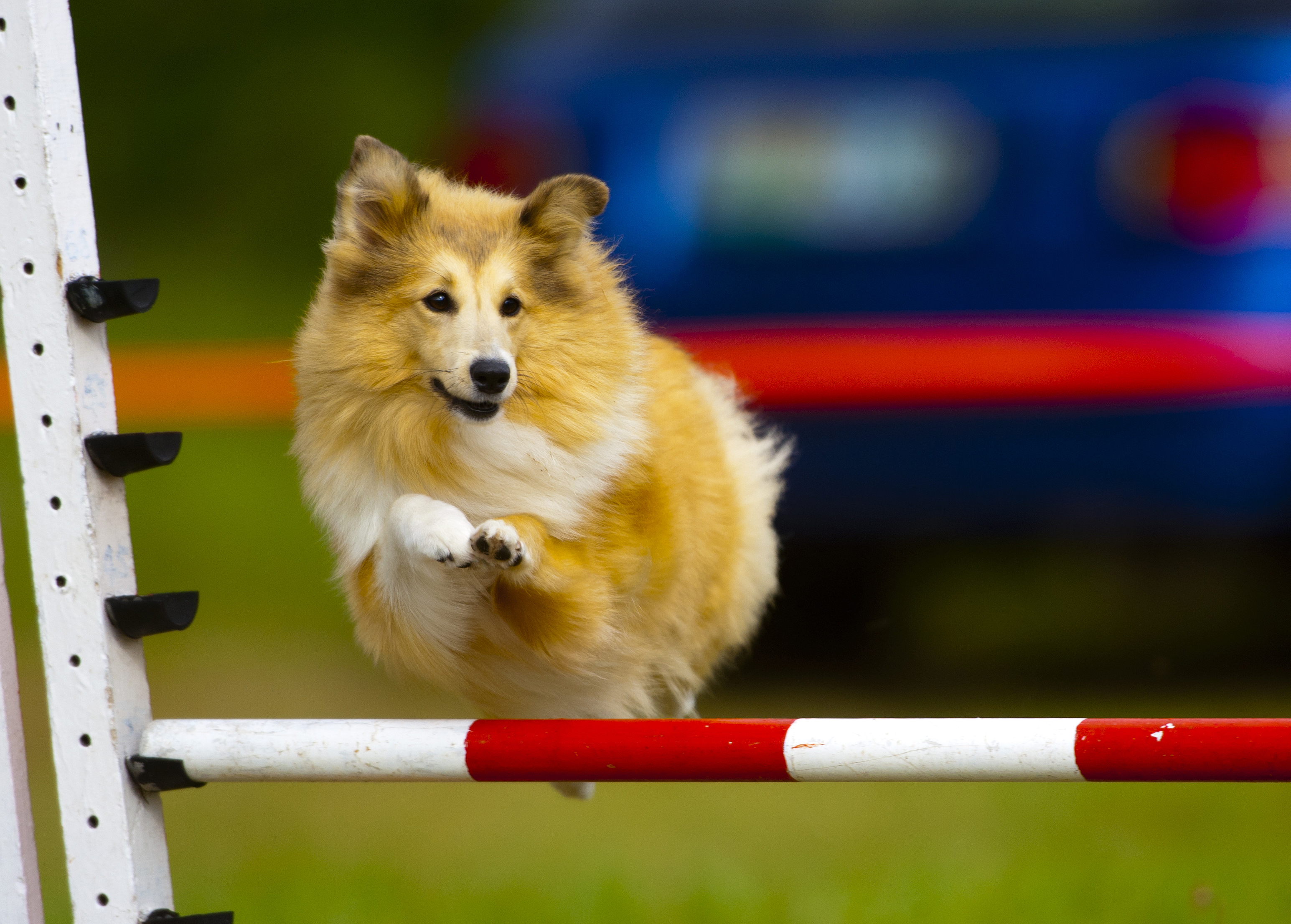 Animaltalk Top Dog Awards - get to know the agility winners! Q