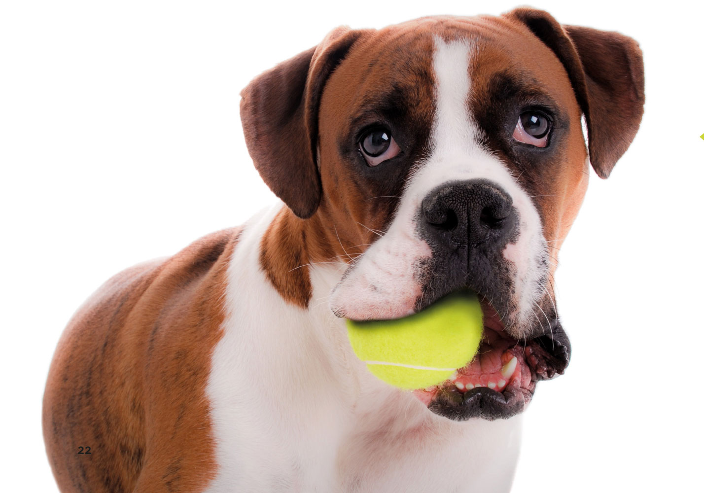 12 ways that your dog always gets the better of you post1