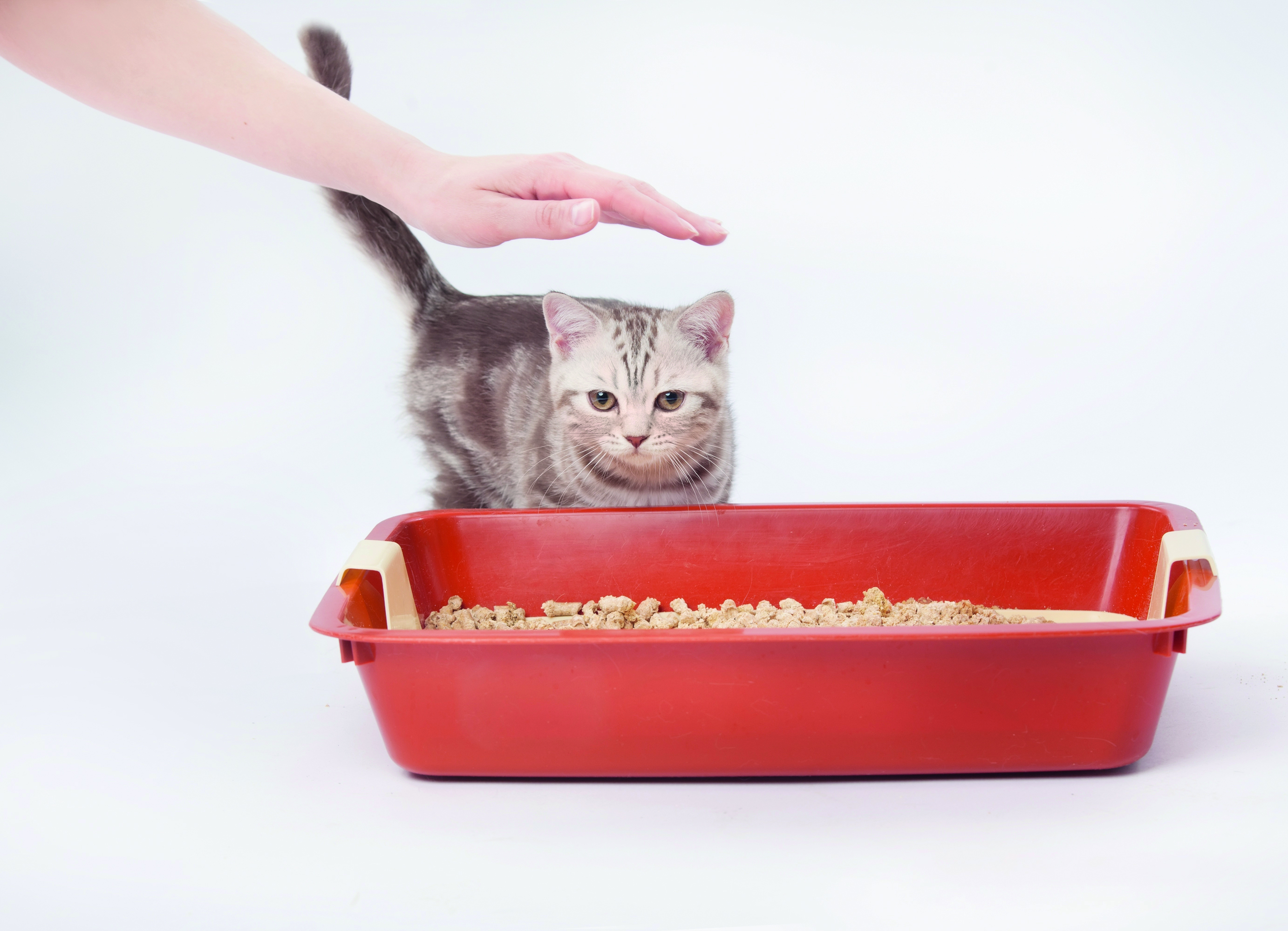 Cat won't use litter tray Cat won't use litter tray shutterstock 136346567