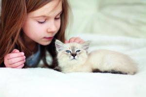 20 ways to love your cat 20 ways to love your cat shutterstock 144532799