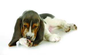 Vet Talk- Your Questions Answered Vet Talk- Your Questions Answered shutterstock 122216308