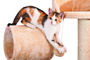 How To Create a Cat-Friendly living space shutterstock 234348376