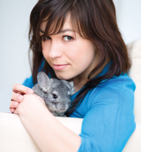 5 Things you should do for your chinchilla shutterstock 135183218 edit