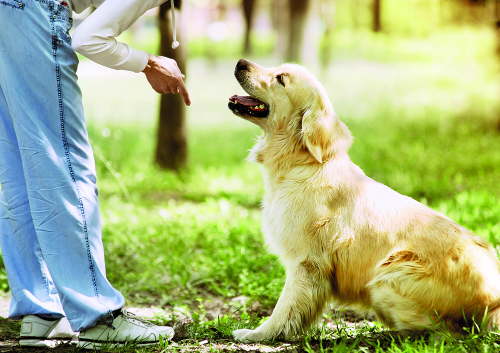 Requirements of an instructor offering puppy classes shutterstock 158179946