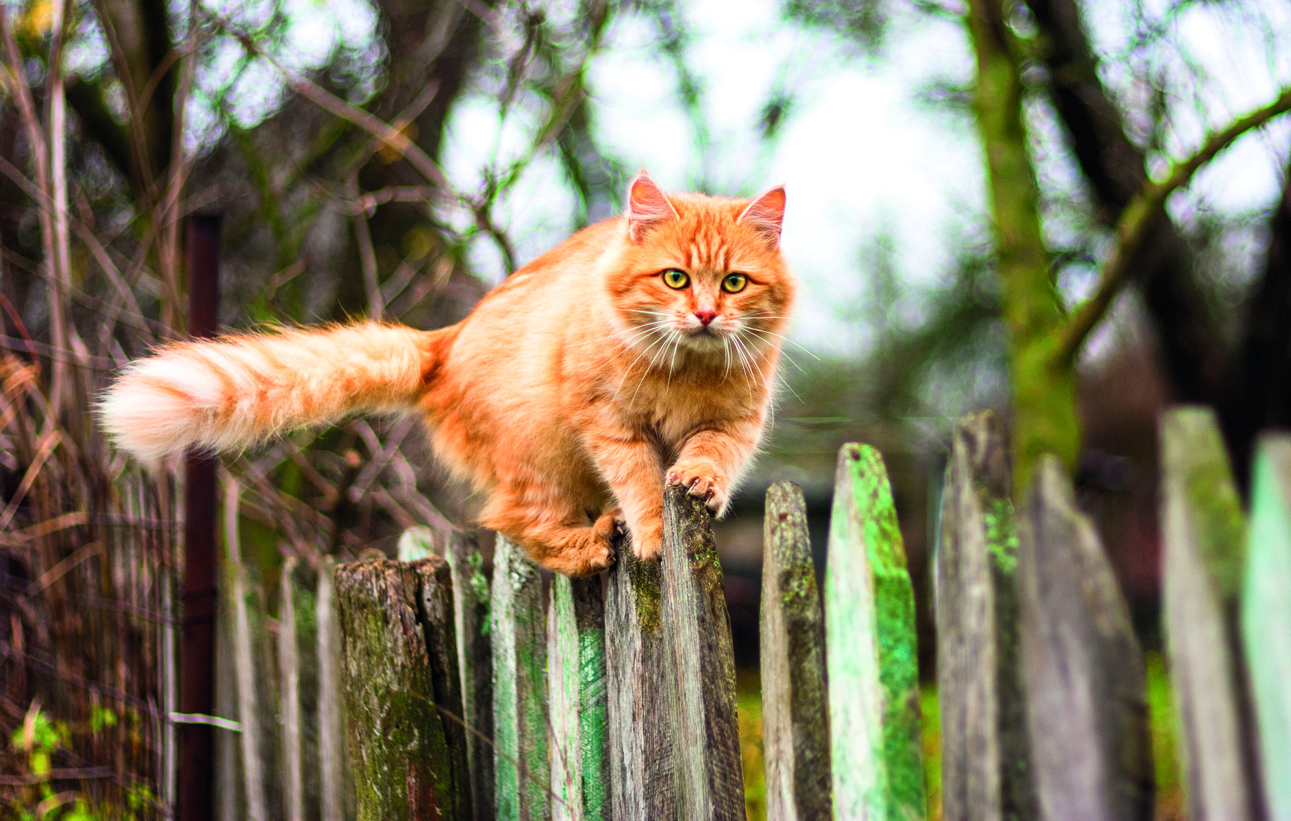 8 THINGS CATS DO REALLY WELL 8 THINGS CATS DO REALLY WELL shutterstock 229147372