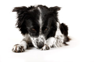 Q & A: Why does your dog eat soil? Q & A: Why does your dog eat soil? shutterstock 55290112