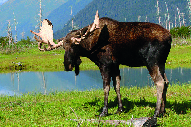 10 cool things about the moose moose 3