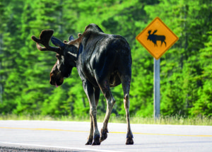 10 cool things about the moose moose drive