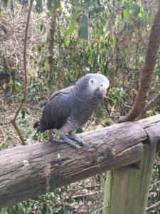 Birds of Eden 19749422 1631013720244897 336503670 o