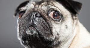 Dog Eyes Watering Problem