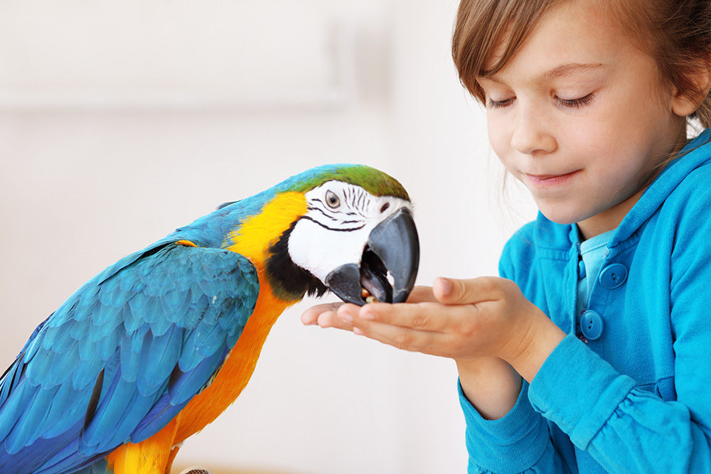 What to consider before buying your first parrot What to consider before buying your first parrot parrot 1 big 1
