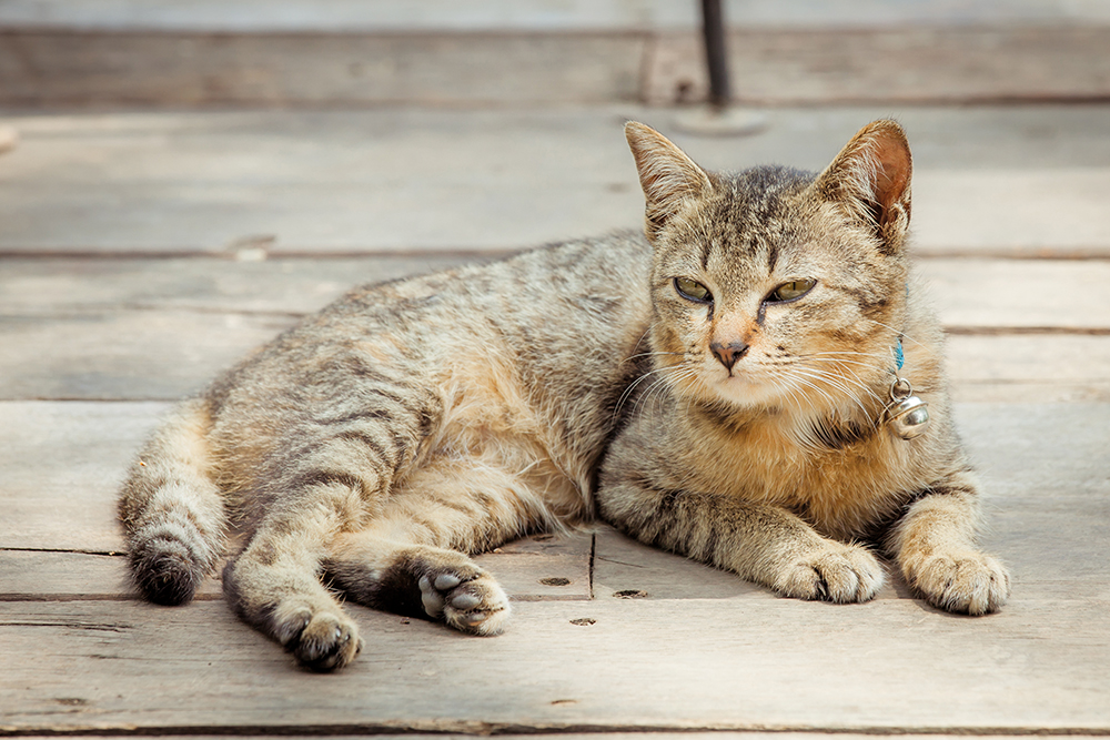 Q & A: Can cats become 'senile' in old age? Q & A: Can cats become 'senile' in old age? shutterstock 272193326