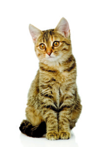 Q & A: Can cats become 'senile' in old age? Q & A: Can cats become 'senile' in old age? vet